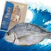 台西聚鮮-黃錫鯛3包含運組