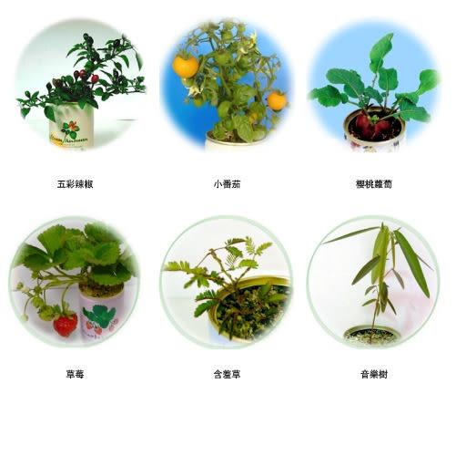 『喜憨兒』希望種子罐頭植栽:蔬果植物6入
