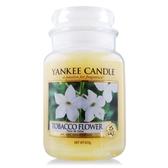 YANKEE CANDLE 香氛蠟燭-煙草花 Tobacco Flower(623g)