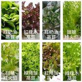 【果之蔬-全省免運】溫室栽種優質文心蘭/萵苣X8朵任選組合(每朵約80-120g±10%)
