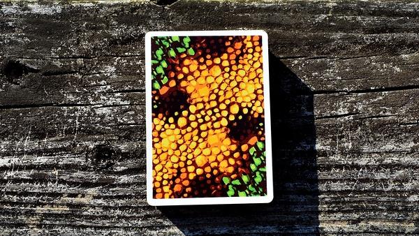 【USPCC撲克】KAMELEON PLAYING CARDS 變色龍 S103049579