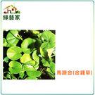 【綠藝家】M08.馬蹄金種子(金錢草)5...