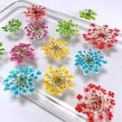 蕾絲花 吸色雪珠花 ,壓花乾花滴膠材料 (一份12朵)