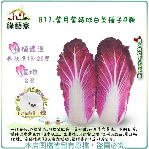 【綠藝家】B11.紫月紫結球白菜種子4顆