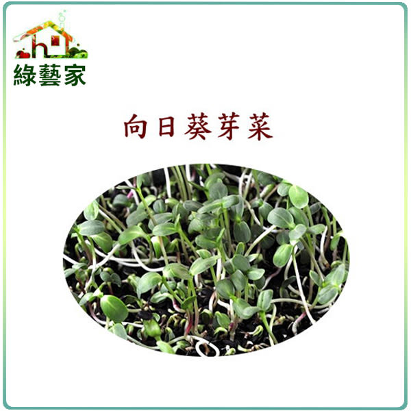 【綠藝家】J08.向日葵芽(芽菜種子)20克