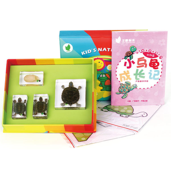 小烏龜成長記/簡體字/標本