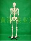 170cm人體大骨骼模型美術成人骷髏骨架標本180cm全身脊椎教學模型
