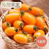 沁甜果園SSN.金瑩小番茄(5台斤/箱)﹍愛食網