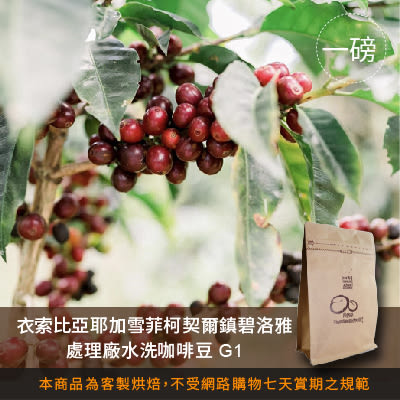 【咖啡綠商號】衣索比亞耶加雪菲柯契爾鎮碧洛雅處理廠水洗咖啡豆G1(一磅)