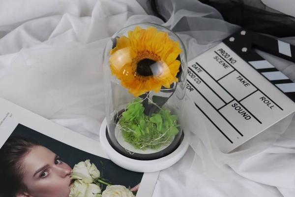 不凋花向日葵玻璃罩成品,向日葵尺寸9-10公分,附送禮紙盒