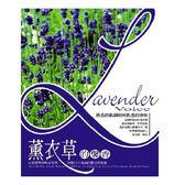 薰衣草的馨香CD (10片裝)