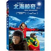北海鯨奇DVD 瑞典馬爾默國際兒童影展/最佳兒童影片