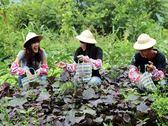 [台南]仙湖休閒農場-豐富單人田園美食一日遊