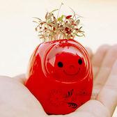 【BlueCat 】真情滿溢愛情精靈DIY 草頭俄羅斯娃娃 盆栽