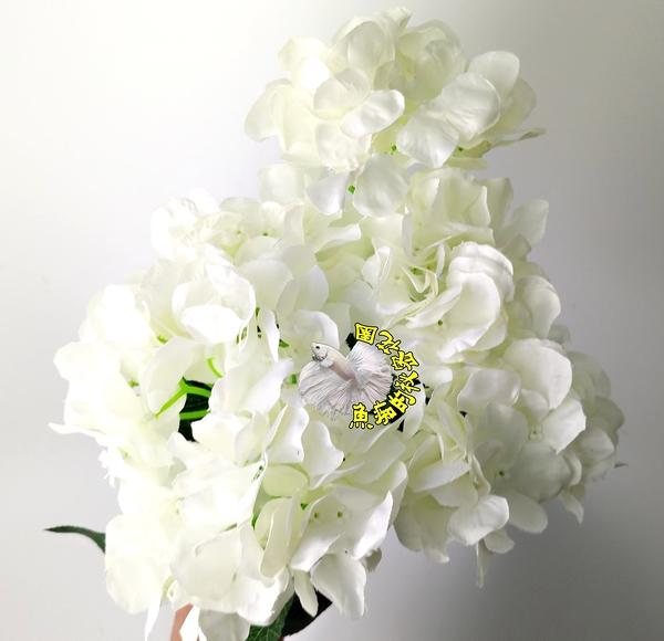 白色 仿真6頭繡球花 假花☆居家店面櫥窗玄關.大廳擺飾.園藝飾品 盆栽裝飾 過年插花 節慶裝飾