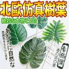 【培菓平價寵物網】北歐ins簡約風仿真樹葉植物魚春雨葉小/支