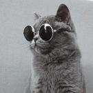 寵物狗狗貓咪墨鏡眼鏡狗狗貓咪墨鏡