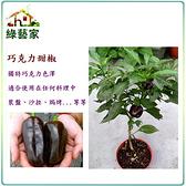 【綠藝家】G42.巧克力甜椒種子3顆
