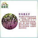 【綠藝家】J12.紫高麗菜芽(芽菜種子)...