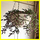 吊蘭吊盆吊籃花盆塑料垂吊掛彩色加厚樹脂掛鉤壁掛綠蘿多肉懸掛