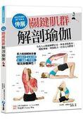 伸展關鍵肌群解剖瑜伽