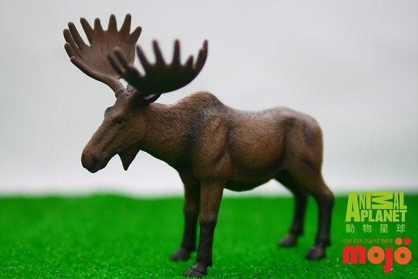 【Mojo Fun 動物星球】森林動物-美洲麋鹿 387023