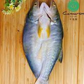 Camaron 卡馬龍嚴選 特級 午仔魚 一夜干