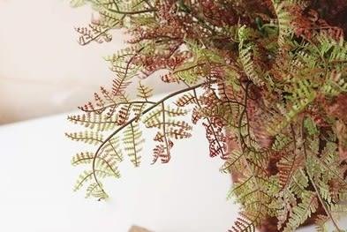 [協貿國際]新款秋色垂直綠化配草配葉植物牆配材仿真植物把束文竹葉材3束入