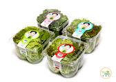 高品質安全無毒蔬菜  綜合萵苣 定期配送四個月  250g * 36盒入【NICE GREEn美蔬菜】