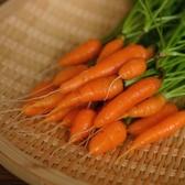 CARMO迷你胡蘿蔔種子 園藝種子(單份) 【FR0061】