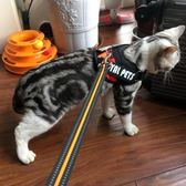 貓咪牽引繩防掙脫專用溜貓繩栓貓遛貓背心式背帶項圈小貓繩子貓鍊