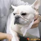 寵物狗狗一次性毛巾貓咪干吸水大號浴巾洗澡【小獅子】