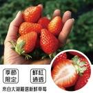 【台灣草莓】嚴選香水草莓X1盒 【單盒28-35顆/400克±10%/含盒重】