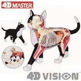 4D MASTER動物黑白貓橘黃貓器官解剖拼裝玩具模型擺件 教具用 8號店WJ