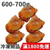 饕客食堂 5隻 澳洲旭蟹 600-700g/隻 海鮮 水產 生鮮食品