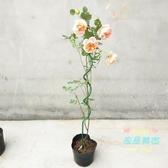 爬藤架 植物爬藤支架 花支架 植物造型架 植物扶直架 花卉支架 園藝支架T