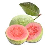 【果之家】燕巢紅心芭樂5台斤(1箱/約6-8顆)