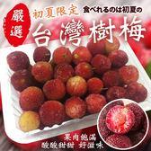 【果之蔬-全省免運】楊梅(樹梅)水果X2盒【200克±10%/盒】