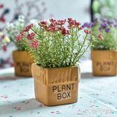 小盆栽仿真盆景干花植物擺設假花裝飾品擺件 造物空間