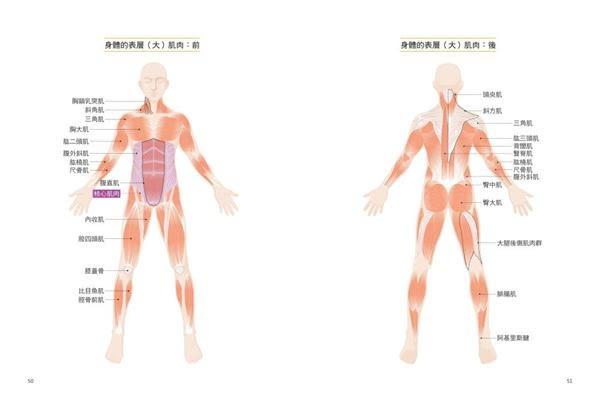 釋放疼痛的5分鐘速效伸展:10大最常見的痛症部位,59個最關鍵的精準伸展,動作到..