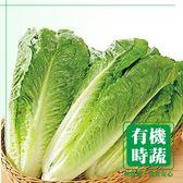 【有機認證生鮮時蔬】蘿蔓萵苣 ( 250g /包)