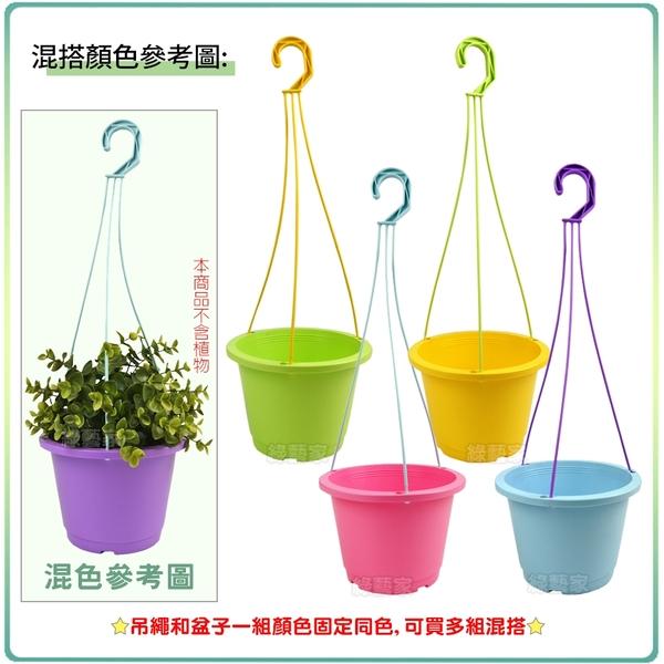 【綠藝家】6吋馬卡龍吊盆組 - 黃色