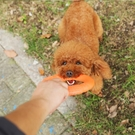 狗狗玩具磨牙耐咬