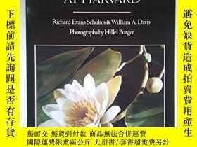 二手書博民逛書店The罕見Glass Flower At HarvardY256260 Richard Evans Schul
