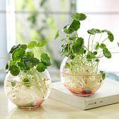 【黑色星期五】水培植物花瓶玻璃水培銅錢草花盆透明玻璃瓶