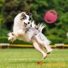 狗狗飛盤飛碟耐咬訓練專用訓犬寵物訓練玩具【小獅子】