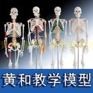 85cm170cm人體骨骼模型骨架人體模型成人小骷髏教學模型脊椎全身