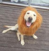 【雙12】全館低至6折寵物搞笑獅子頭套假發金毛大型犬帽子頭飾狗狗變身裝獅子頭套圍脖