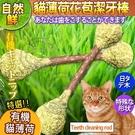 【培菓平價寵物網】 自然鮮系列》貓薄荷花苞潔牙棒貓玩具NF-013