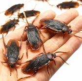 蟑螂玩具 仿真蟑螂 假蟑螂小強蜈蚣蝎子